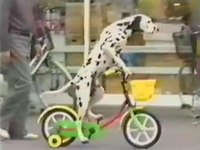 dog-on-cycle