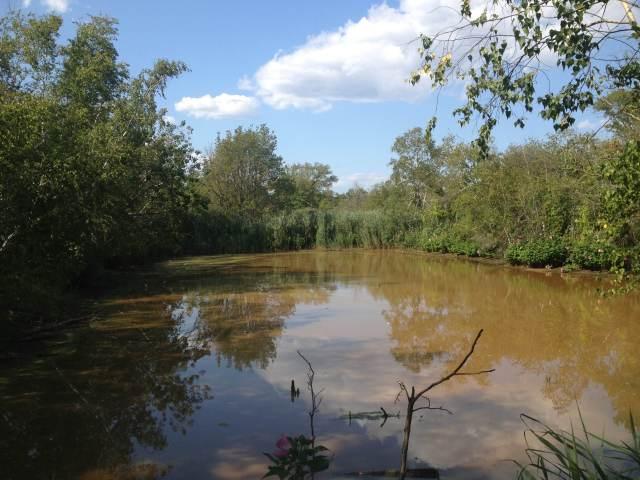 Big John's Pond