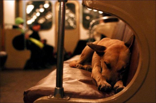 Dogs love transit